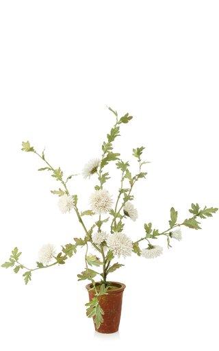 M'O Exclusive White Chrysanthemums