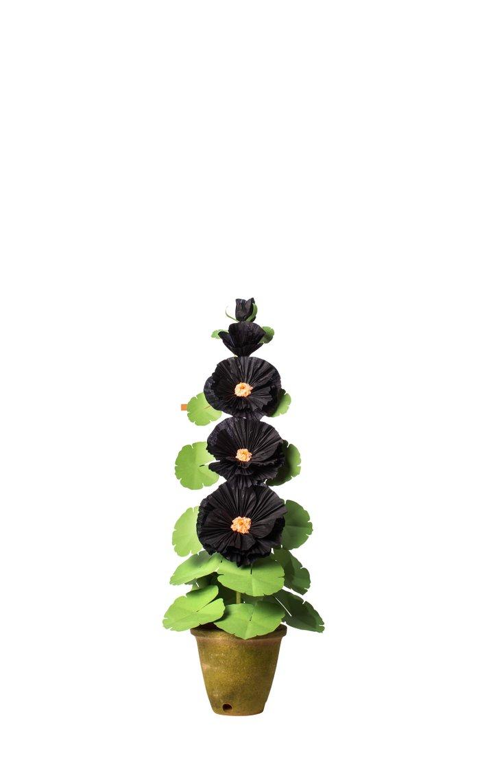 Hollyhock Plant