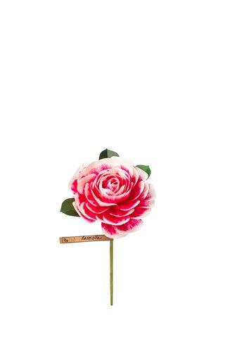 Special Camellia